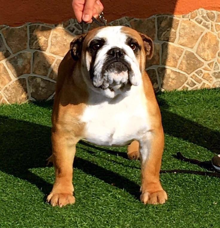 fat-puppys-barbie.jpg