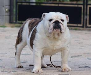 Fat Puppys Sasha